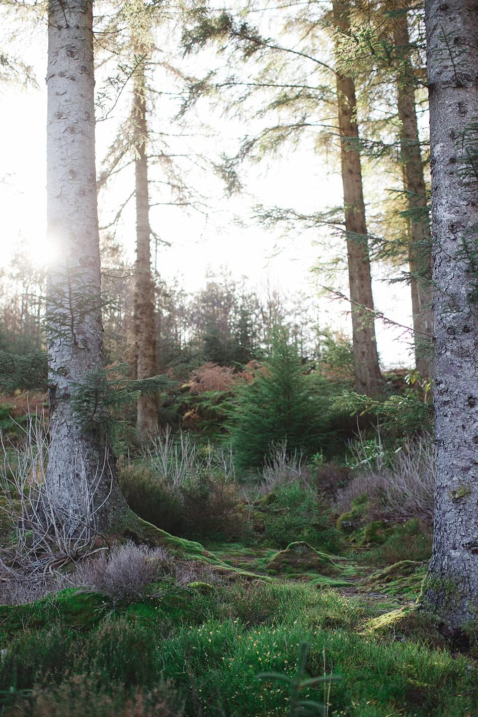 Loch Achray Trossachs Scotland -11.jpg