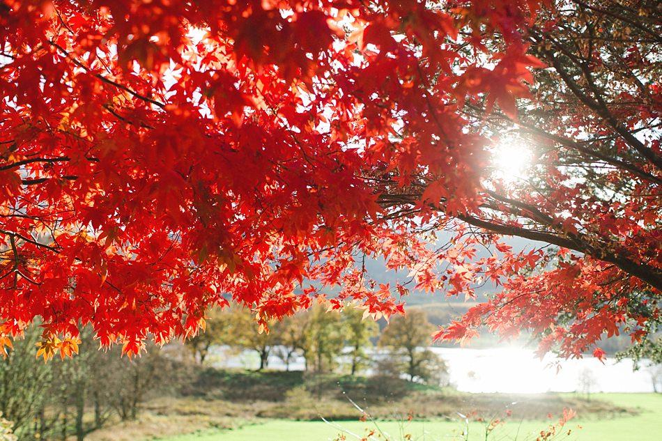 Loch Achray Trossachs Scotland -16.jpg